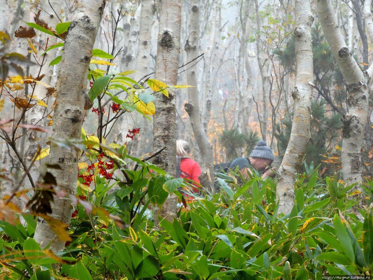 Массовое восхождение на г.  Майорскую в честь дня Туриста Южно-Сахалинск, Россия