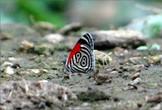 Шикарная бабочка, да еще и с номером....