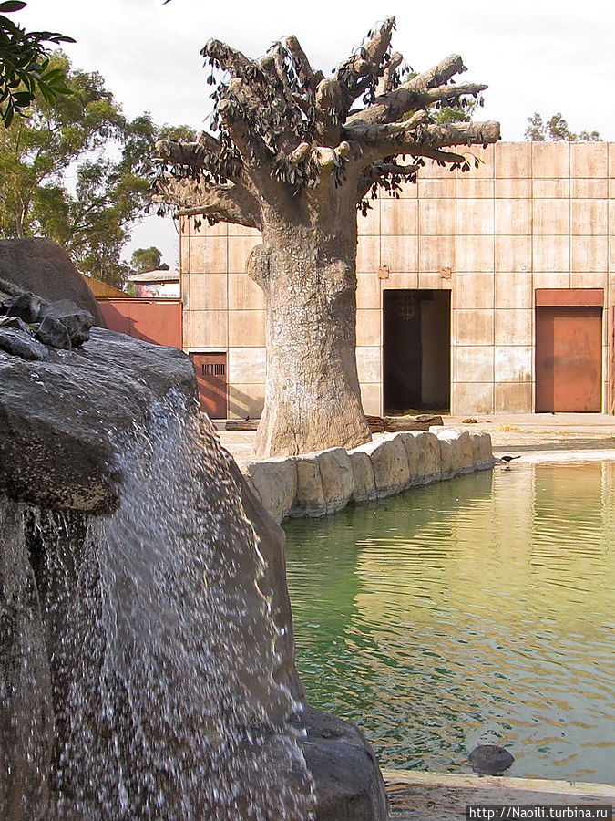 Вольер слона с водопадом