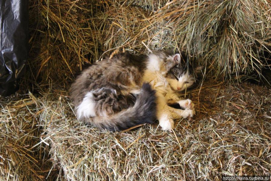 Спящий экспонат в загоне с козочками и овечками :)