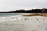 Здесь любят прогуливаться лебеди и утки. И конечно, как в любом приморском городе огромное количество чаек...