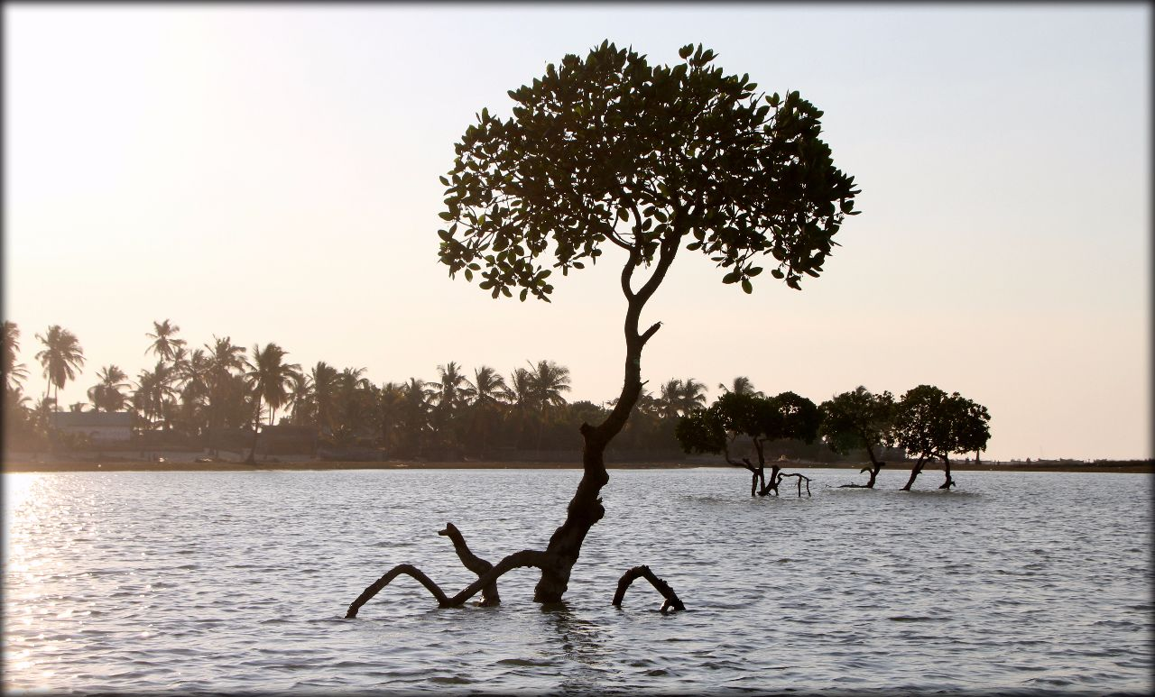 Мечта по имени Мадагаскар 2 Мадагаскар