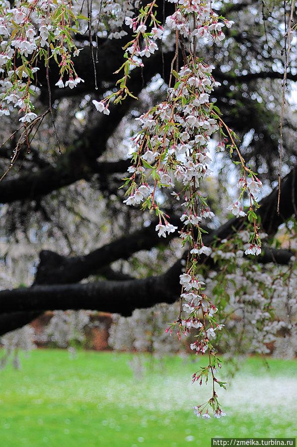 На эти цветущие деревья можно смотреть бесконечно!