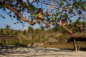 Южный Ломбок, пляж Мавун