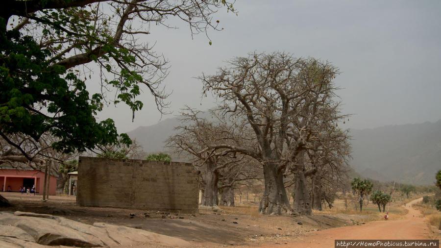 Тчамба. Школа и школьники Тчамба, Камерун