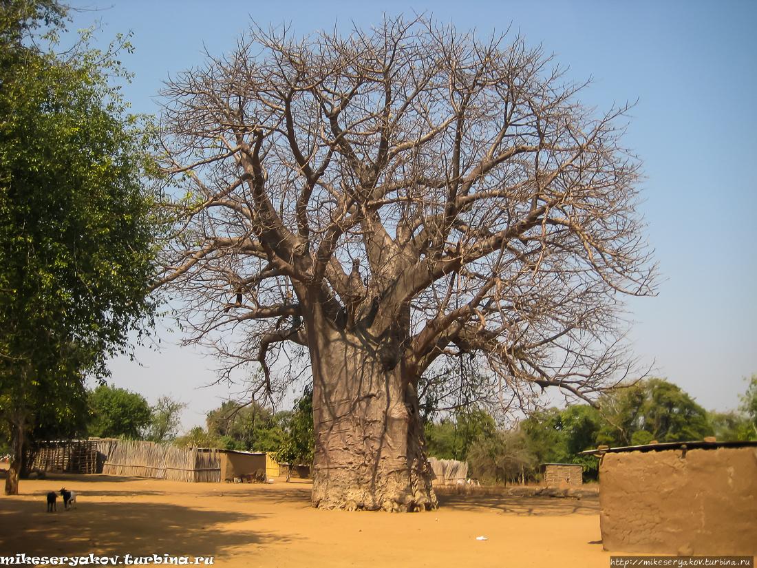 Импалила Намибия — техническое закрытие