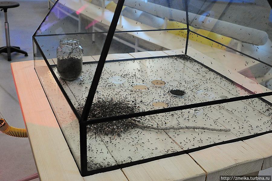 А есть и живые — большая муравьиная ферма. На фото только кормушка. Дома для муравьёв с мой рост.
