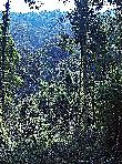 это единственный кадр, который я подрезал, что бы увеличить не много домик на дереве
