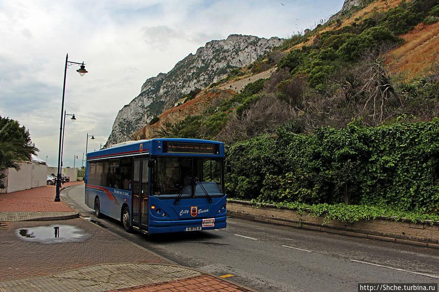 автобус подходит к остановке возле моего отеля