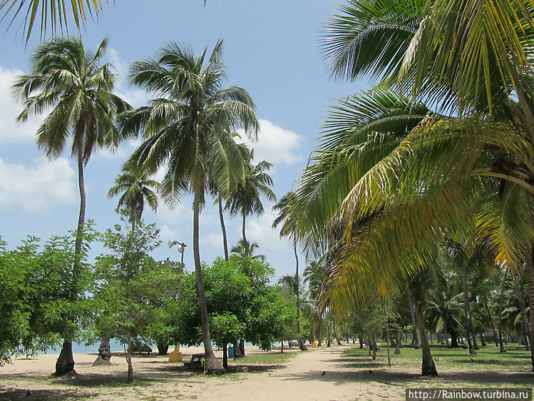 Пальмовый парк у пляжа