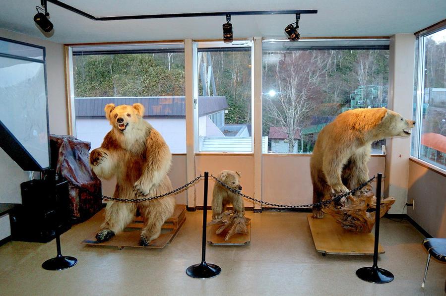 Музей медведей