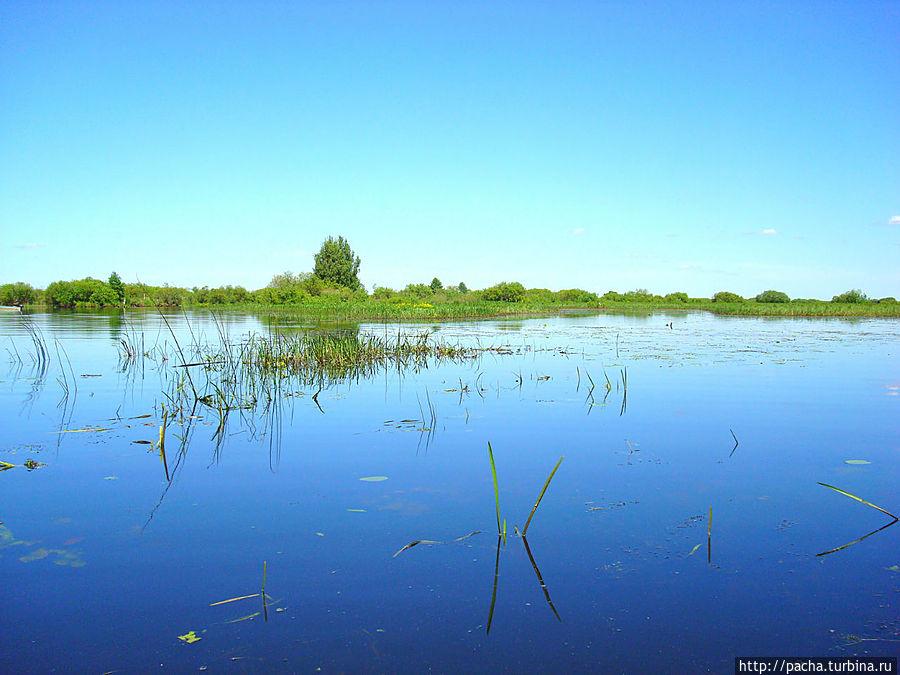 В Березинском биосферном заповеднике появятся плавающие домики для туристов.