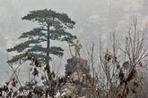 Памятник сербским ратникам. Стоит на скале, смотрится достаточно впечатлительно.