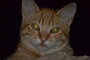 Португальский кот (г. Эрисейра).