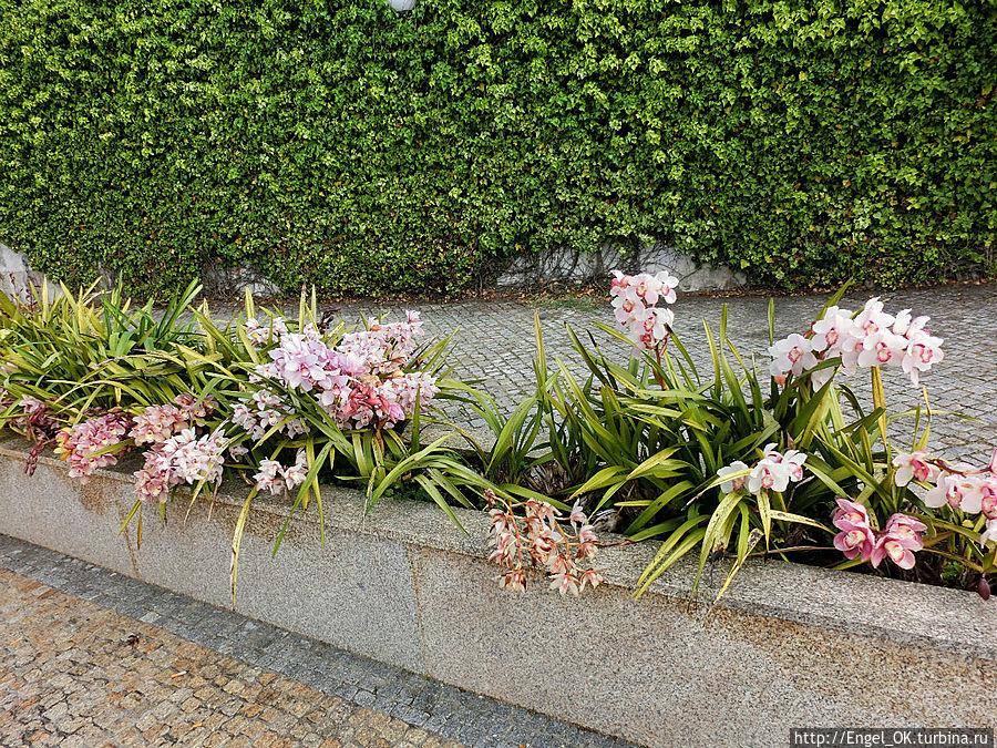 те самые орхидеи
