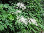 По дороге на водопад попадаются такие вот растения. Кто знает как они зовутся — напишите здесь, пожалуйста.