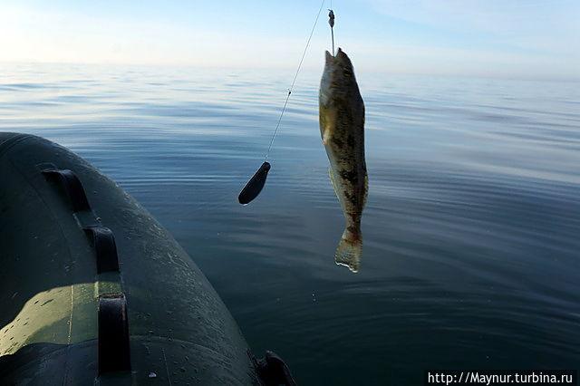 рыболов южно сахалинск