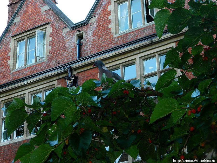 Внезапно внимание привлек голубь, громко потрошащий дерево