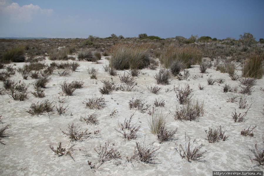 Лимасольское соляное озеро Акротири, Акротири и Декелия