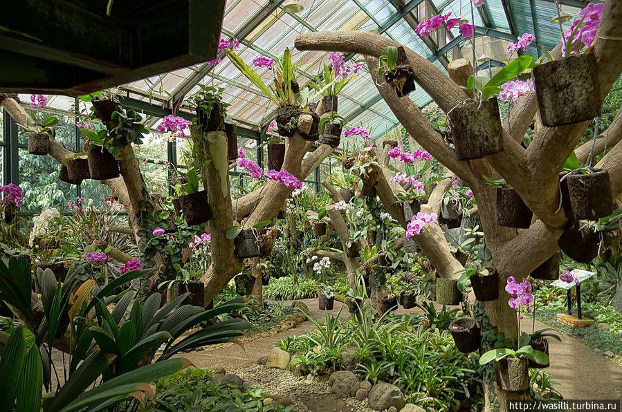 провести оранжерея в ботаническом саду в москве оформить свое