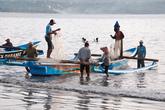 Рыбаки за день делают несколько выходов в море. Первый раз выходят еще ночью, чтобы привезти на сушу первые уловы к утренней закупке. Позже, в течение дня, делают еще один или несколько выходов.