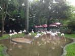 Парк птиц в Игуасу является вторым в мире по величине. Занимает 17 га леса и находится в 500м от национального парка Игуасу. Это гигантская экосистема с большим разнообразием птиц и животных, включая крокодилов, удавов и лемуров.