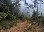Сумерки в джунглях