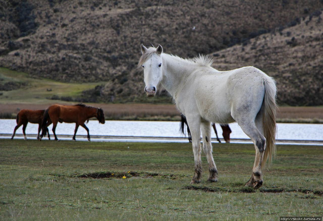 Одичалые Котопакси Национальный Парк, Эквадор
