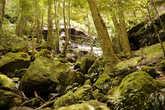 Дождевой лес Голубых гор