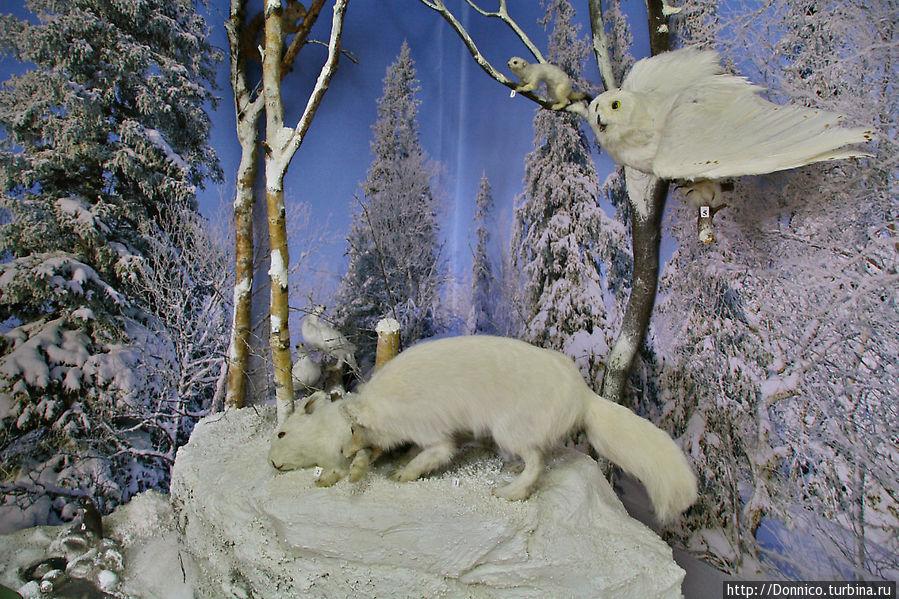 зимой все становится белым в том числе раскраска животных