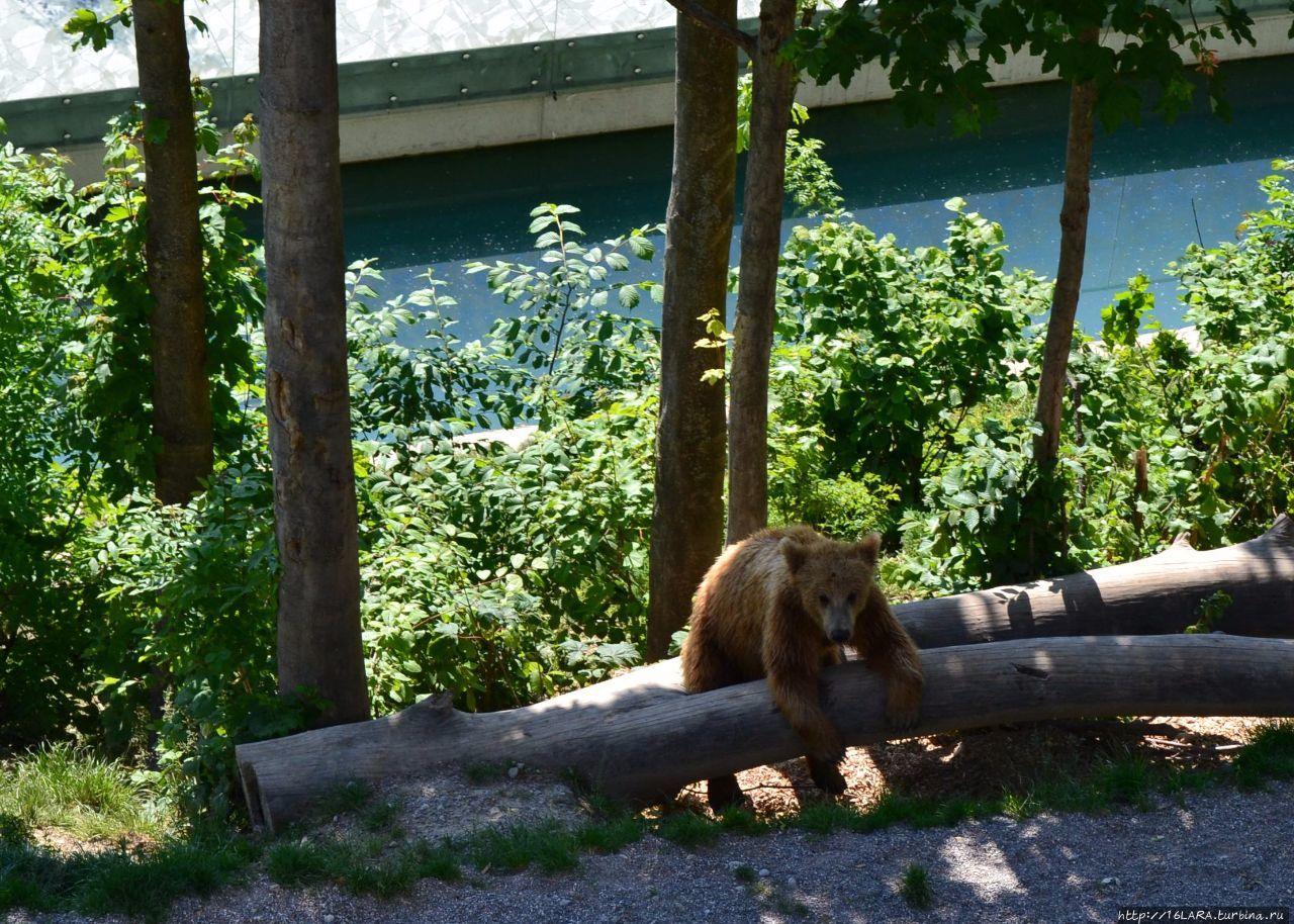 Медведи в Берне — скучно