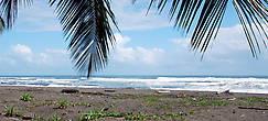 Вот на этот берег и приплывают в апреле тысячи морских черепах
