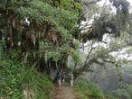 Облачный лес (cloud forest) на склоне вулкана Меру.