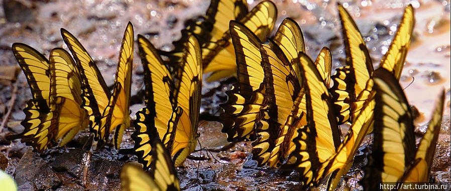 И жизнь всегда стремится к воде Игуасу национальный парк (Аргентина), Аргентина