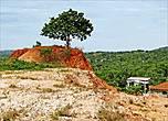 То самое дерево, что укоренилось в самой высокой точке огненного холма