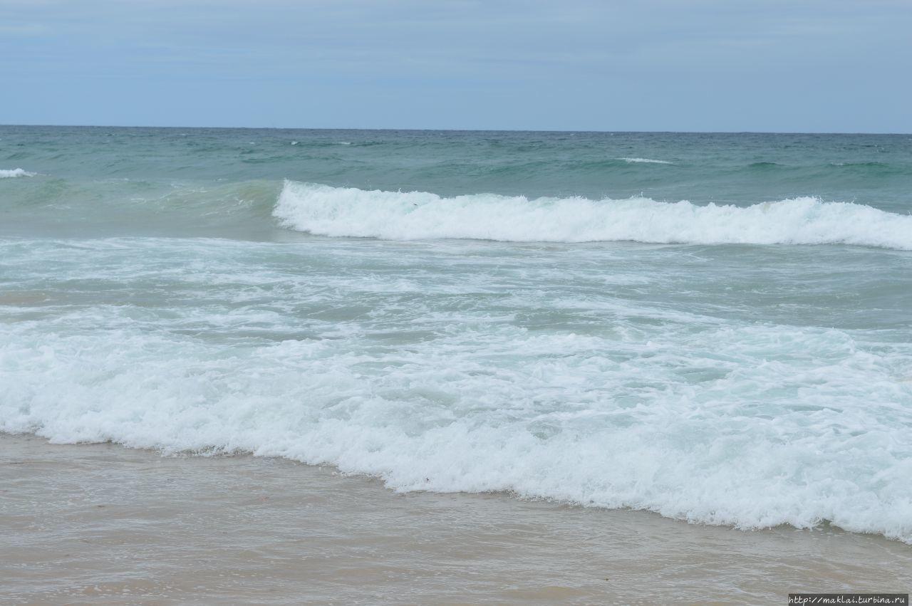Сидней. Пляж. В поисках тасманского тигра Сидней, Австралия