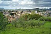А вот и панорама на Поджибонси и оливковый сад.