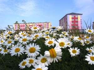 Певек — город романтиков и ромашек! Источник фото: Интернет.