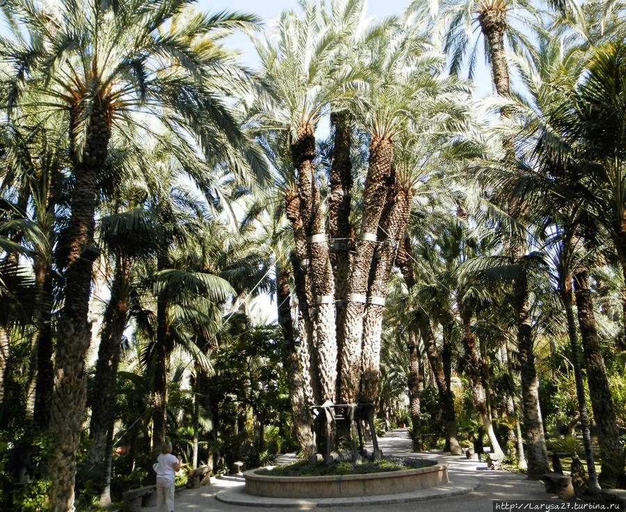Императорская пальма — названа в честь посетившей сад в 1894 г. Елизаветы Австрийской