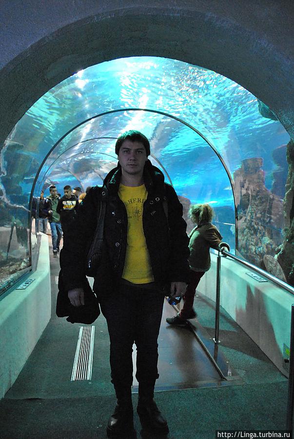 У входа в 80-метровый тоннель Океанаиума