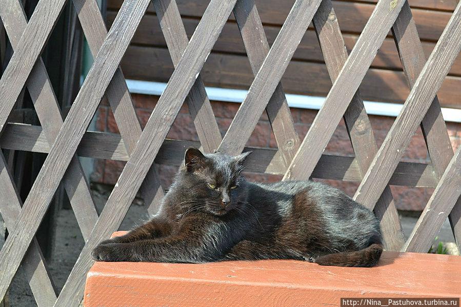 А это местный житель философствуя нежится на солнце Кострома, Россия
