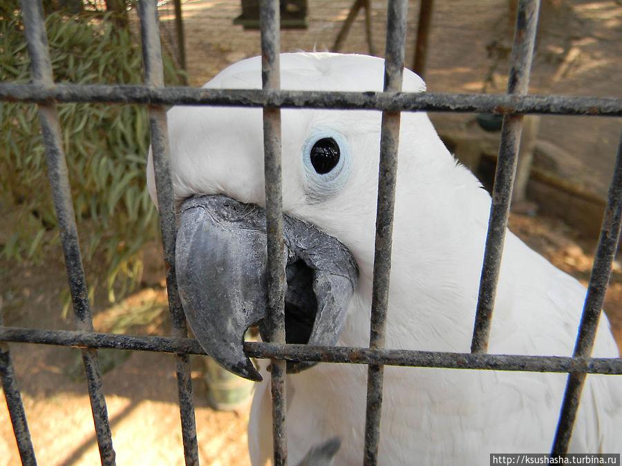 А этот попугай хочет общаться, но раз закрыт в клетке — значит не безопасен, может больно ущипнуть