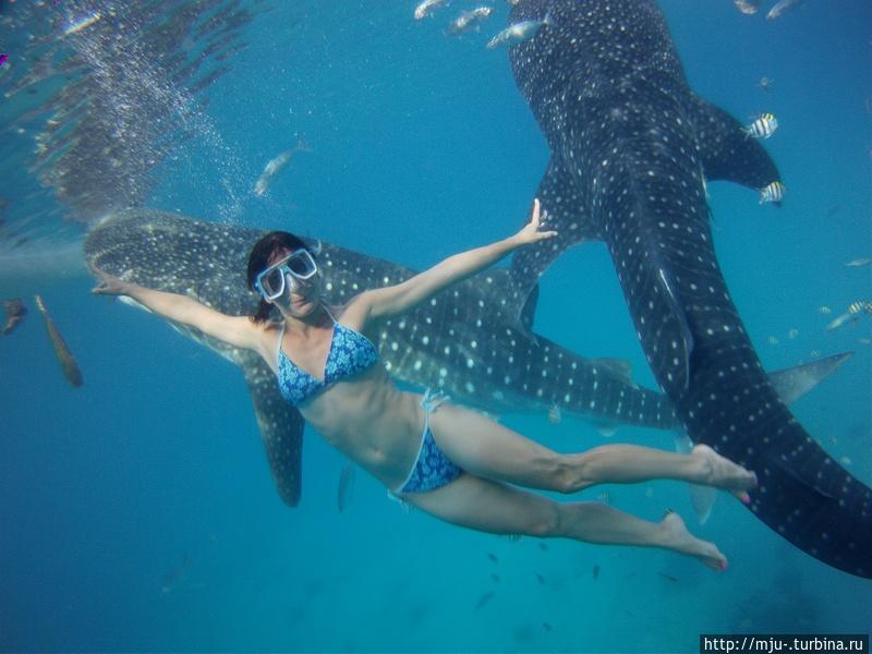 Китовые акулы на Филиппинах Остров Себу, Филиппины