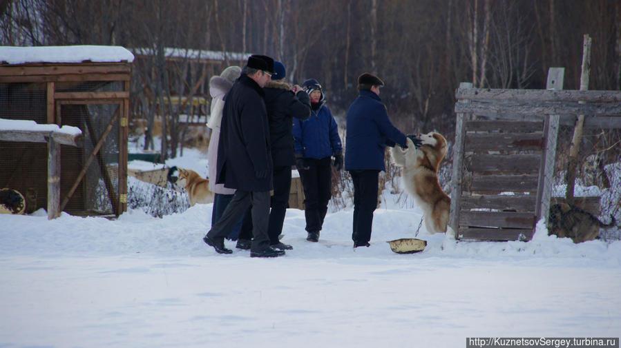 Ездовые собаки в этнокультурном комплексе
