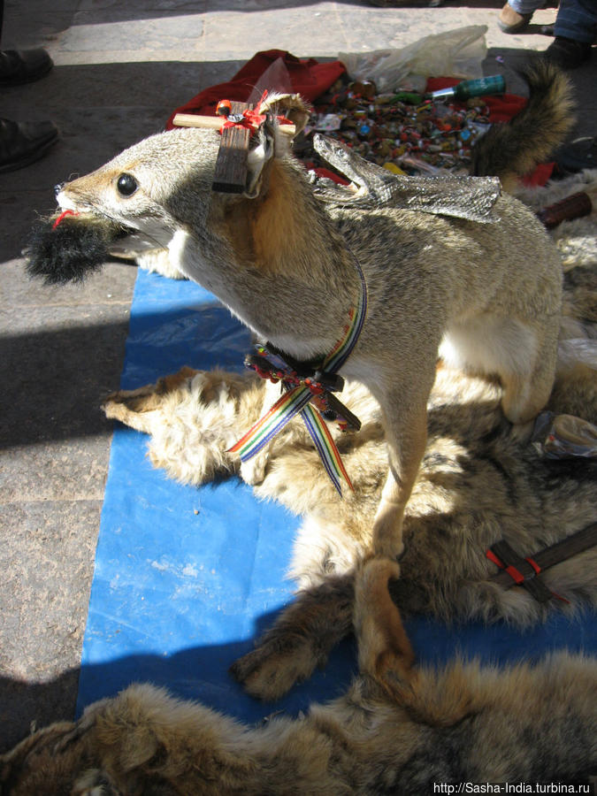 Чучело перуанской лисы