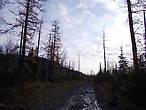 в лес!