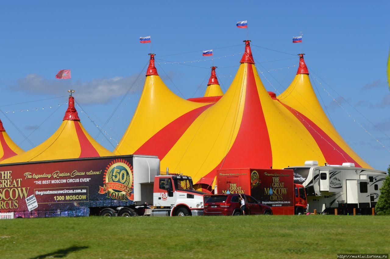 Цирк приехал и... остался