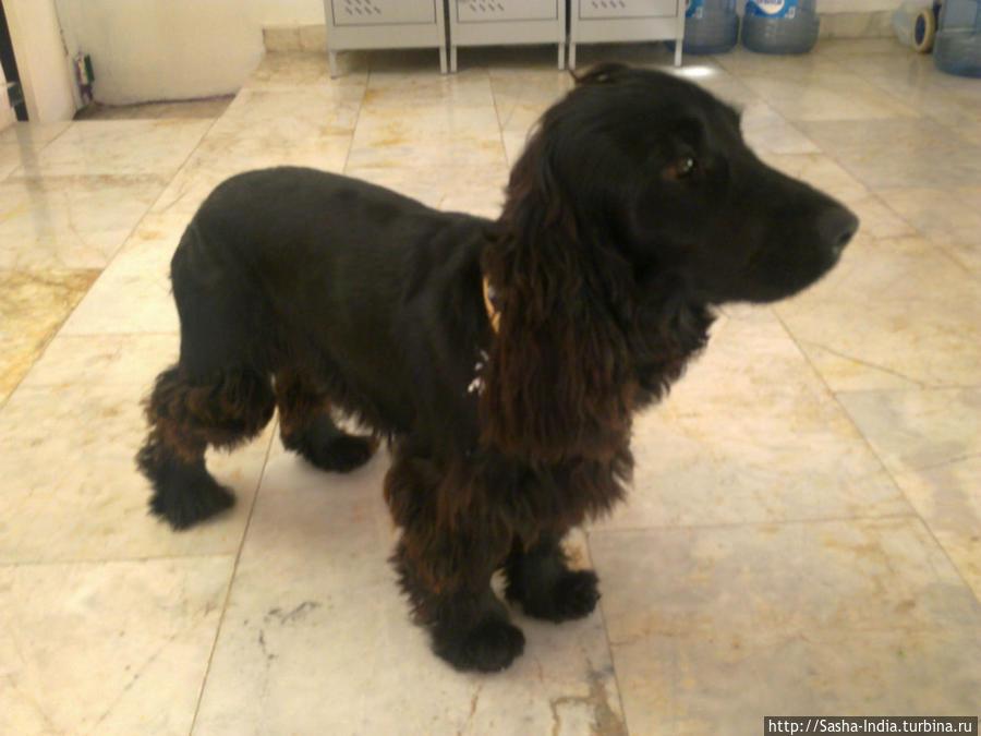 Дружелюбный пёс — Дантэ