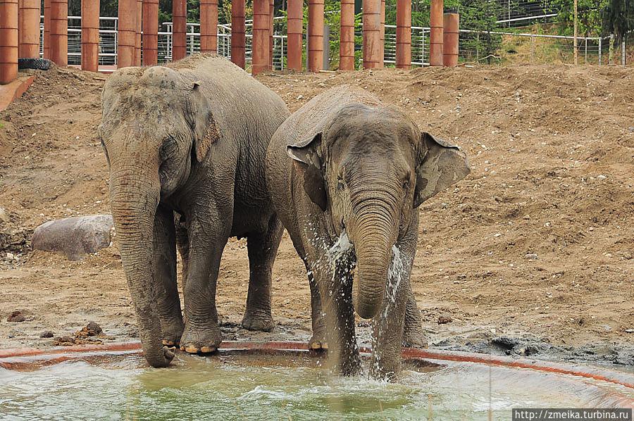 За ними очень интересно наблюдать. Я впервые услышала, как трубит слон :)