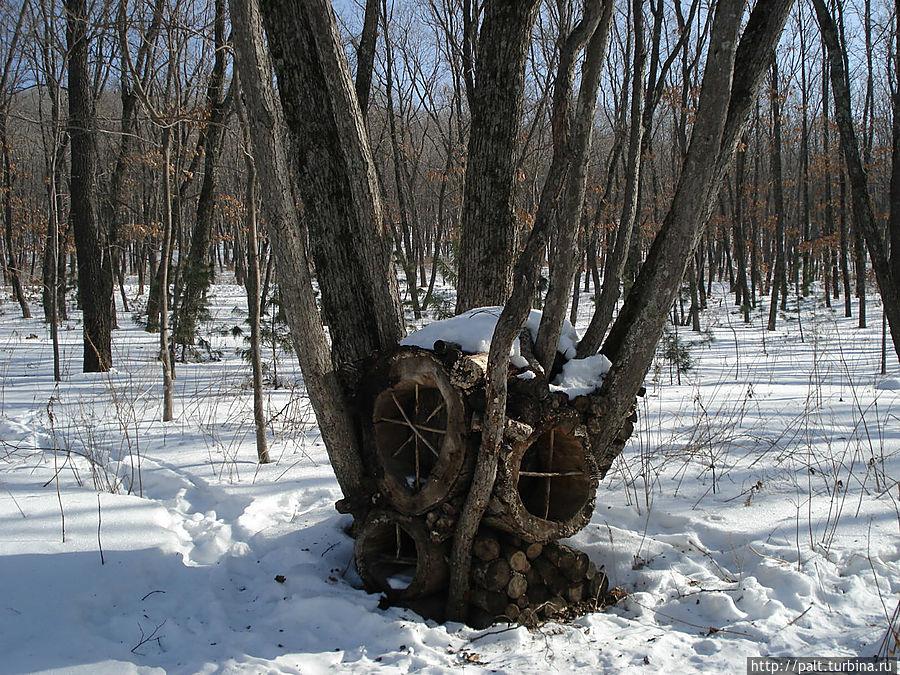 То ли гнездо на земле, то ли норка на дереве